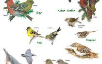 Картинки птицы Сибири с названиями