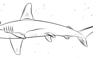 Как нарисовать акулу-молот, пошаговая инструкция