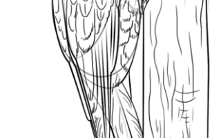 Как нарисовать дятла на дереве поэтапно для начинающих
