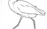 Как легко нарисовать цаплю карандашом, поэтапная инструкция