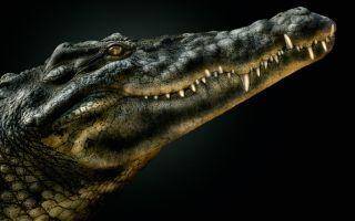 Красивые картинки крокодилов на рабочий стол