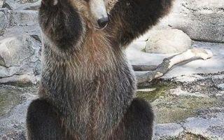 Смешные картинки с медведями