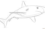 Как нарисовать Карибскую рифовую акулу пошагово