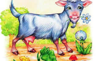 Картинки для детей коза