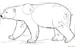 Как нарисовать Белого медведя по шагам