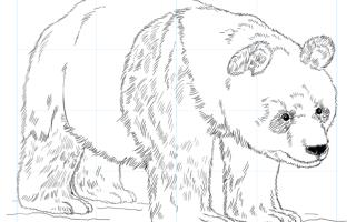 Как нарисовать гигантскую панду