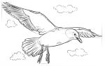 Как нарисовать чайку над морем карандашом — поэтапная инструкция