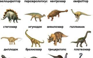 Картинки виды динозавров с названиями