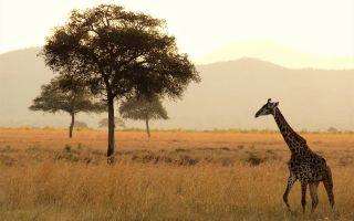 Картинки Африка
