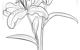 Как нарисовать Лилию карандашом для начинающих (поэтапно)