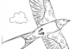Как нарисовать ласточку карандашом поэтапно ребенку