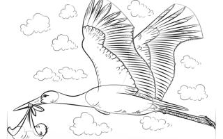 Как нарисовать аиста с ребенком карандашом поэтапно для детей