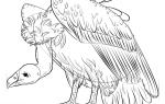 Как нарисовать Грифа поэтапно карандашом