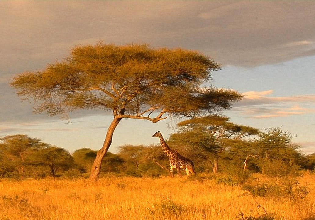 Африка в картинках, поздравление