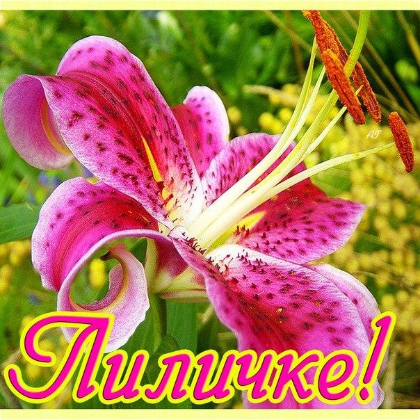 Именное поздравление для лилии