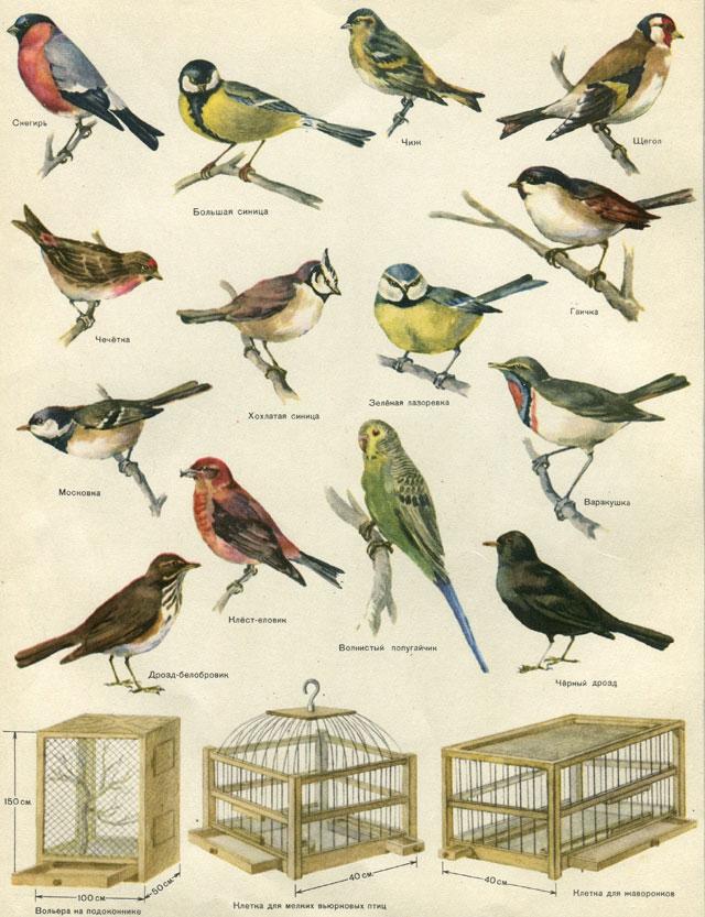 Каталог картинок всех птиц