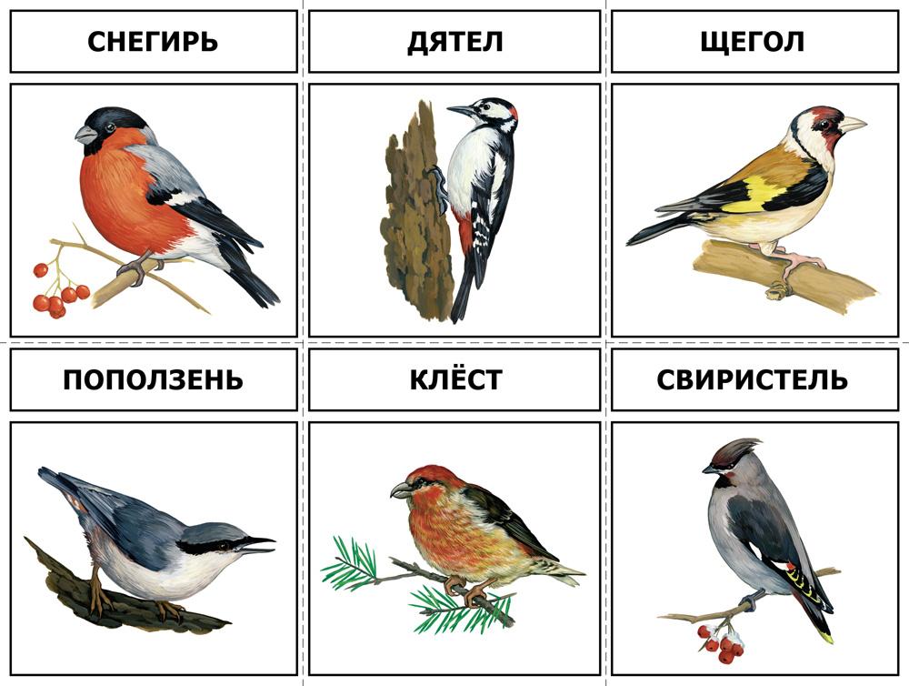 есть демонстрационный материал птицы зимующие картинки завоевал право именоваться