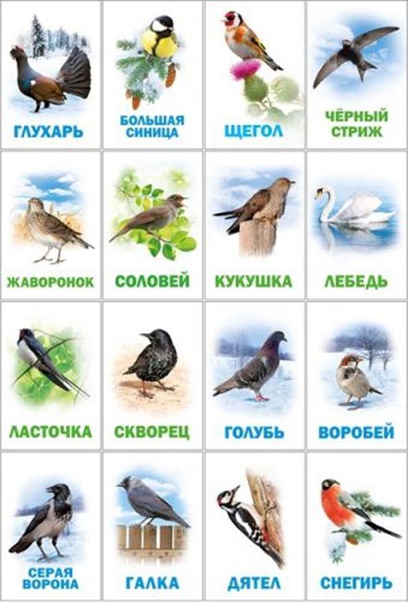 как найти название птицы по картинке кашля