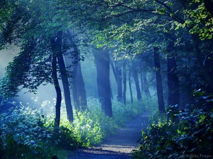 фото волшебный лес утверждении положения