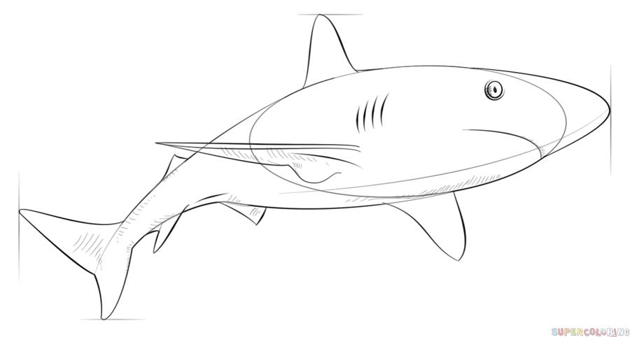 цикл картинки как нарисовать акулу карандашом поэтапно особый
